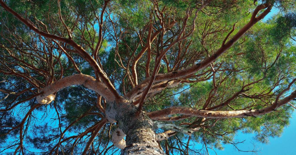 The Great Reset 1 1024x536 - Le « droit des arbres » : vers un nouvel totalitarisme et la perte des traditions !